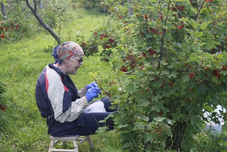 Berit plukker bær